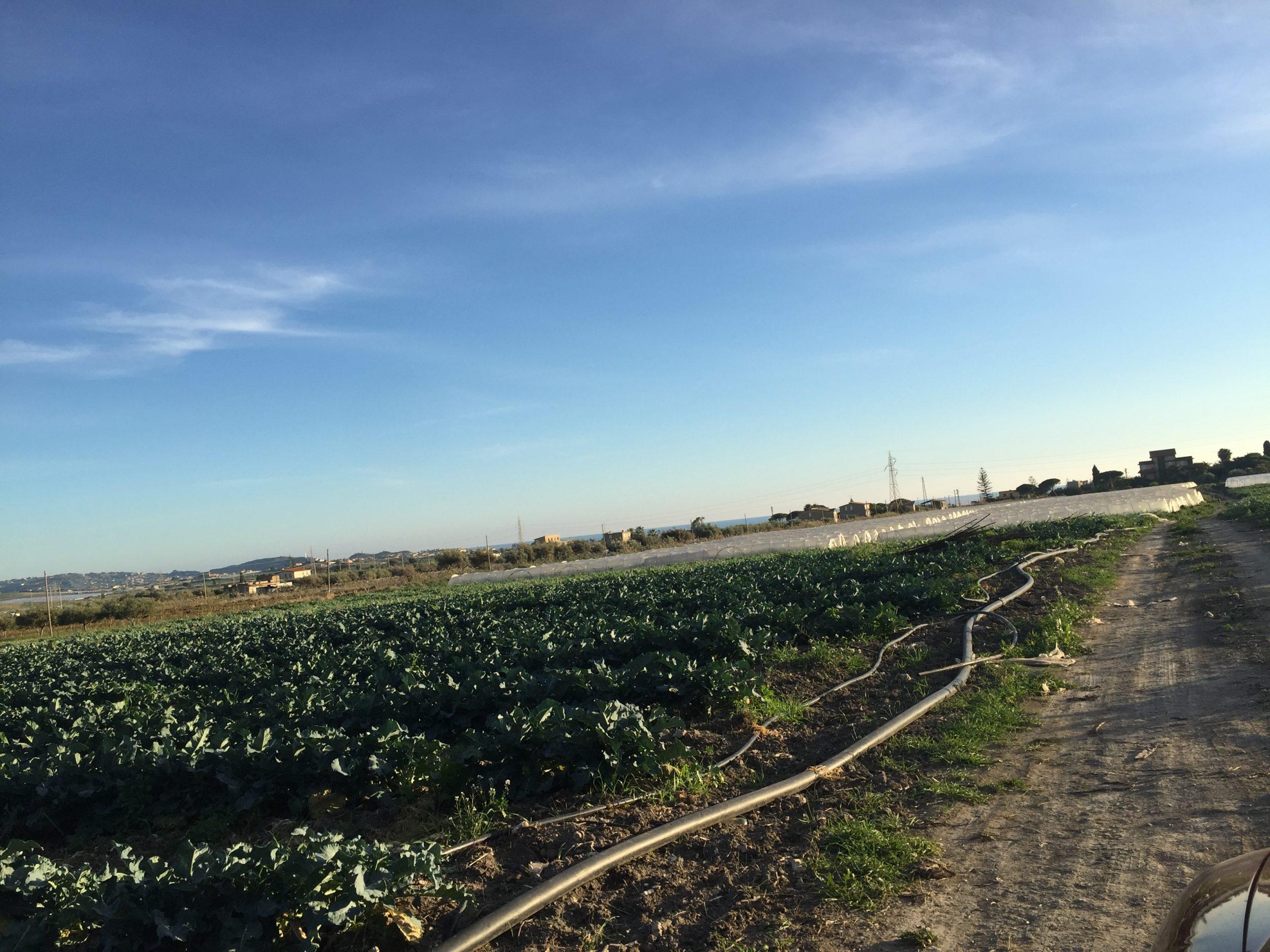Terreno in vendita in via salso snc