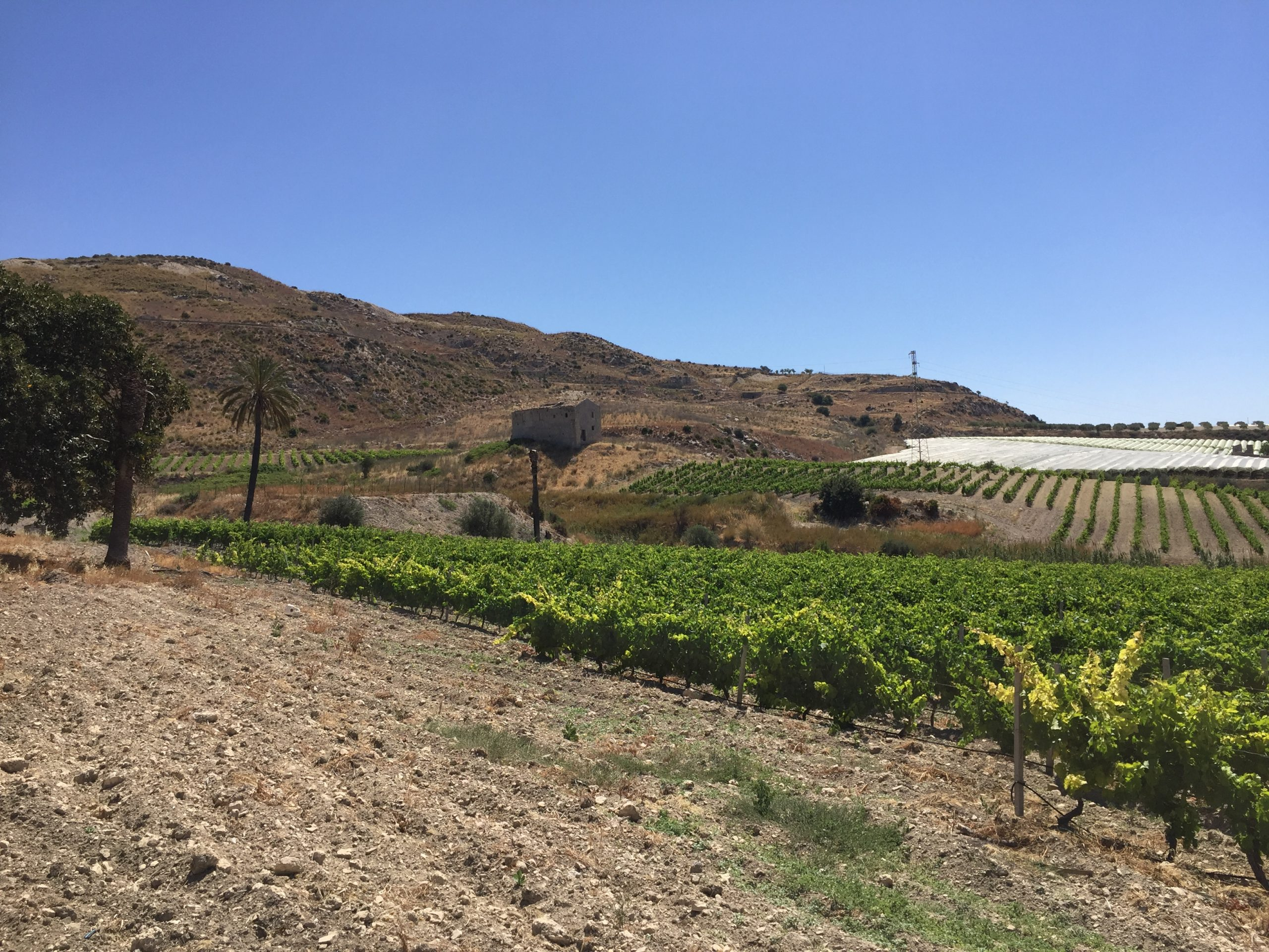 Terreno con Vigneto in vendita in contrada sant' oliva s.n.c., Licata